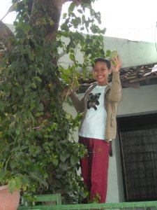 Memetik pohon mangga