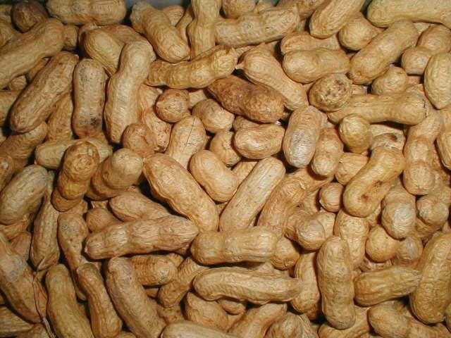 Kacang tanah yang enak.