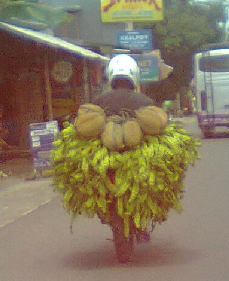 Durian dan pete habis panen.