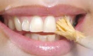 Gosok gigi dengan siwak.